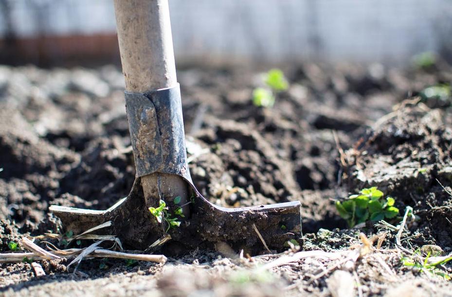 Creating a Healthy Garden